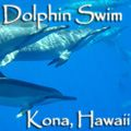 Spiritual Travelers – Dolphin Swim