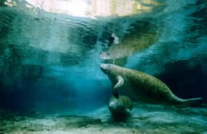 Spiritual Travel - Manatee Swim Adventure