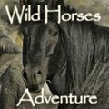 Spiritual Travelers - Wild Horses Adventure